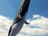 whale-kite-hot-balloon-4