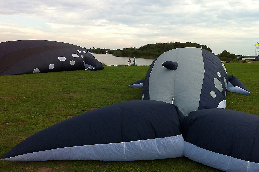 whale-kites-at-rest