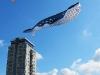 whale-kites