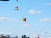 bird-kite