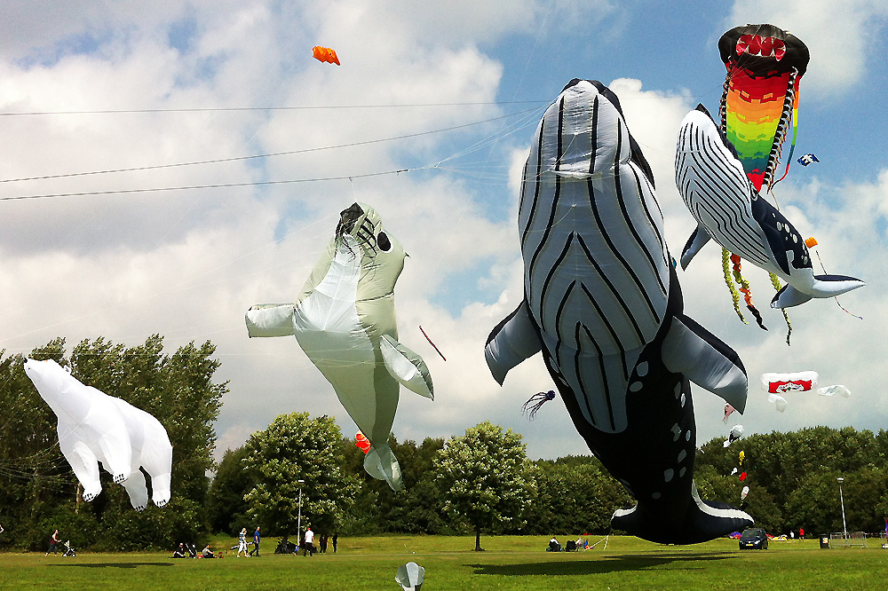kite-display