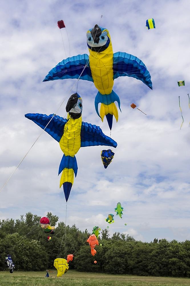 papagaai-vliegers