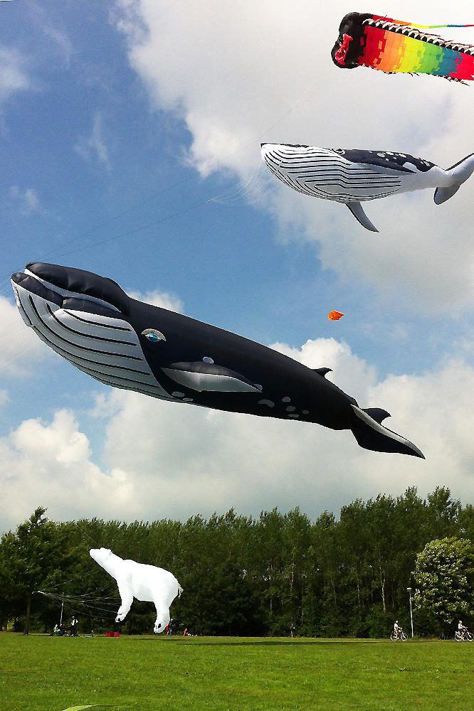 walvis-vliegers