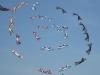 2009 Vliegerfestijn Oostende