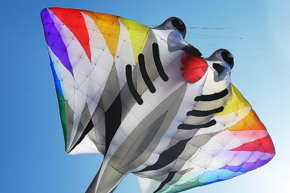 manta-sea-animal-kite