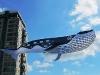 walvis-vlieger